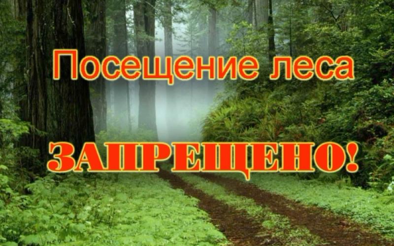 zapret-na-poseshhenie-lesa