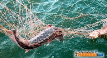 Паўтара гады, штраф і кампенсацыя ўрону — сумны вынік рыбалкі