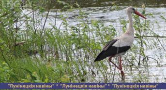 Лунинетчина привлекает птиц