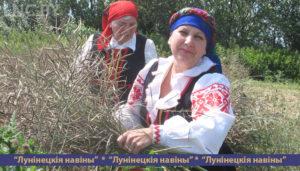 Жатва на Полесской опытной станции в этом году началась со старинного обряда «Зажинки»