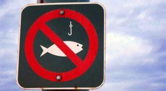 Поймал — опусти. Действует запрет на ловлю рыбы