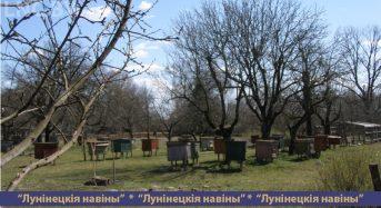 Пчеловодство стало увлечением и работой для жителя Гряды Ивана Мацкевича